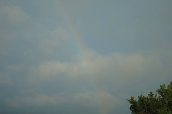 Day 214 - Rainbow